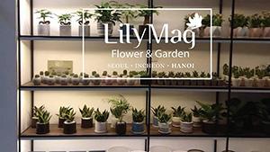 Siglaw tư vấn Lilymag Flower & Garden Vietnam