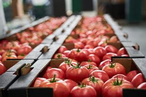 Đăng ký cơ sở thực phẩm (FFR)